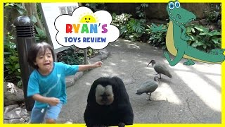 getlinkyoutube.com-KIDS Family Fun Trip to Rainforest Animals for Children Toys for Kids Video Ryan ToysReview