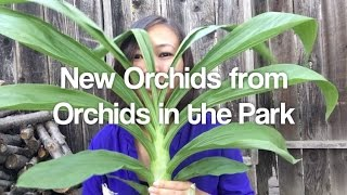 getlinkyoutube.com-Orchids in the Park Haul