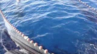 getlinkyoutube.com-Giornata di Pesca alla Lampuga...Sant'Angelo d'Ischia_Hotel Villa Tre Sorelle