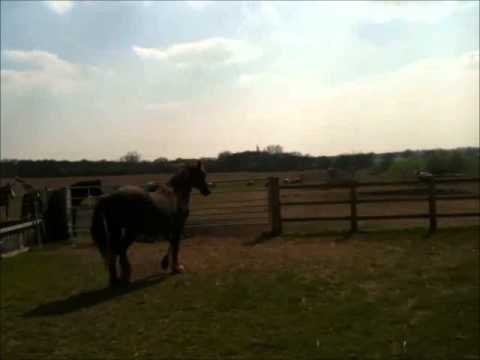World's Oldest Horse - Shayne at Remus Horse Sanctuary, Essex, England
