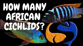 getlinkyoutube.com-How many African Cichlids can I put in my tank Tank Talk 7/11/13 Pres. by KGTropicals