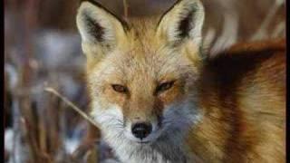 getlinkyoutube.com-Manfred Mann - Fox on the run