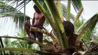 getlinkyoutube.com-Coconut Production in Sri Lanka (2005)