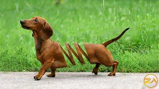 Photoshop Tutorial | Photo Manipulation | The Dog