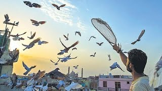 getlinkyoutube.com-Kabootarbazi: The Love & Passion of Pigeon Keeping in Old Delhi