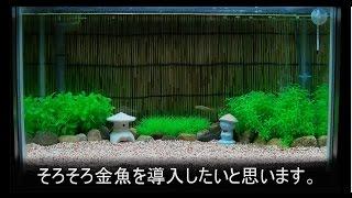 getlinkyoutube.com-金魚飼育をはじめました!