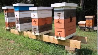 DIY Hive Stand 7 2015