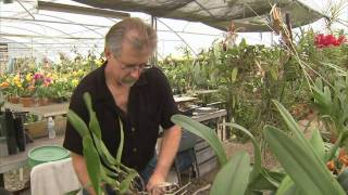 getlinkyoutube.com-Orchid Growers - America's Heartland