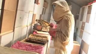getlinkyoutube.com-Пчеловодство в павильонах - Можейко (полная версия)