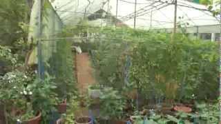 getlinkyoutube.com-Our Kitchen Garden