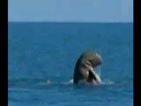 Rare Dolphins Caught on Film