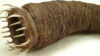 getlinkyoutube.com-Vorsicht: Die gefährlichsten Lebewesen der Welt [2017]!