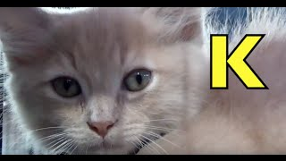 getlinkyoutube.com-ALPHABET ANIMALS - PHONICS - ALPHABET SONG (Part 3) Preschool, K & First