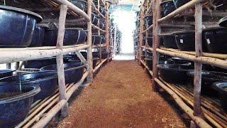 getlinkyoutube.com-เลี้ยงไส้เดือนในกะละมัง เพื่อผลิตปุ๋ยคุณภาพ