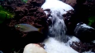 getlinkyoutube.com-Aquascape air terjun,