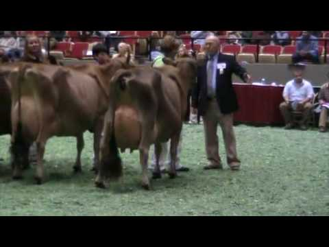Central National Jersey Show Aged Cows