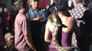 getlinkyoutube.com-Om CMS _ Gita sanca Lengkap dengan ular