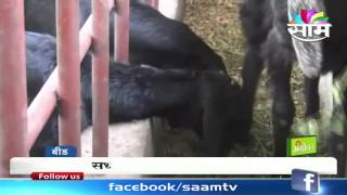 getlinkyoutube.com-Keshav Aghav's successful goat farming