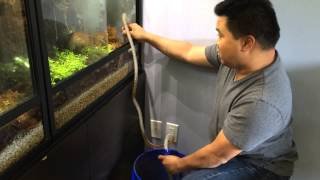 Removing Water From a Terrarium