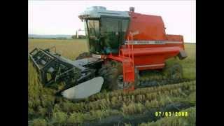 getlinkyoutube.com-Pelas lavouras de arroz