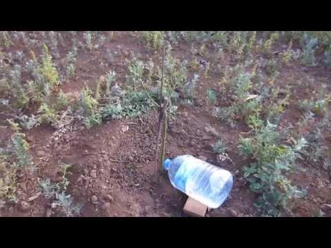 Riego por goteo casero con botella 5 u 8 Lt de agua (PET). Home made watering feeder system 1/2