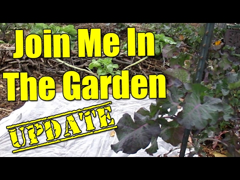 Garden Update 01/19/17 | & My New Preferred Method For Propagating Large Amounts Of Cuttings