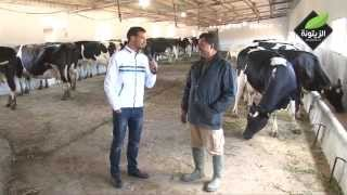 getlinkyoutube.com-بلاد الخير - الحلقة 3 - تربية الأبقار