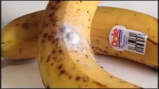 getlinkyoutube.com-Deadly spiders in your bananas!!!