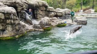 Sea Lion Show (Prospect Park Zoo) Brooklyn, NY 2017