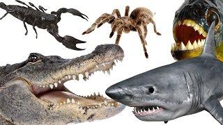 getlinkyoutube.com-Top 10 Most Dangerous Animals In The World