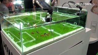 getlinkyoutube.com-Aquarium Ideas from InterZoo 2012 - AquaEl (pt. 4)