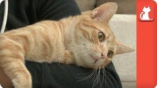 getlinkyoutube.com-Kitten with an Enlarged Heart Jules - Tails of Survival