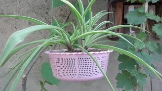 getlinkyoutube.com-How to Make Hanging Basket Planter   Make Your Own Hanging Baskets   Start to End (Urdu/hindi)