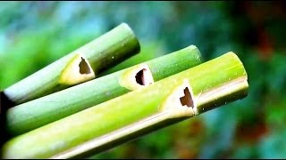 getlinkyoutube.com-How to make a Flute or Swanee Slide Whistle out of Bamboo - Sensory Learning 4 Life