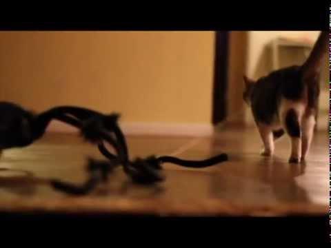 Cat Attacks Huge Spider