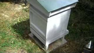 getlinkyoutube.com-Beehive comparisons, a beginners perspect