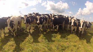 getlinkyoutube.com-جوله فى احدث مزرعة ابقار حلابة بالعالم