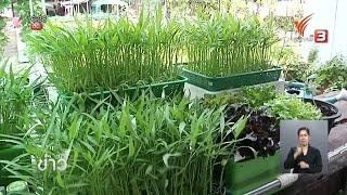 getlinkyoutube.com-ปลูกผักบุ้งจีนในตะกร้าโตในน้ำ-โตไวดูแลไม่ยุ่งยาก