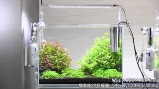getlinkyoutube.com-[ADA view 250] Follow-up video of NA Gallery aquariums. 42weeks(2)