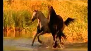 getlinkyoutube.com-Красивая музыка о нежности и любви (Арабатский конь).mp4
