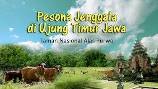 getlinkyoutube.com-Alas Purwo - Pesona Jenggala di Ujung Timur Jawa