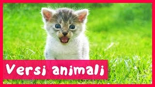 getlinkyoutube.com-Versi animali per bambini