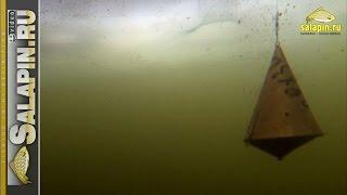 getlinkyoutube.com-Реакция рыбы на докорм кормушкой и шарами (подводное видео, зимняя рыбалка) [salapinru]