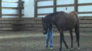 getlinkyoutube.com-Tip for the Ride ~ Bolero...Bullfighting with Your Horse!