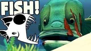 getlinkyoutube.com-NEW GOLIATH FISH IS KIM KARDASHIAN OF THE OCEAN - Feed And Grow Fish