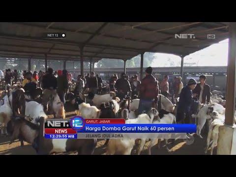 Jelang Idul Adha penjualan domba Garut naik, peternak panen rupiah - NET12