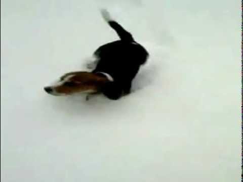 Bigl na snegu