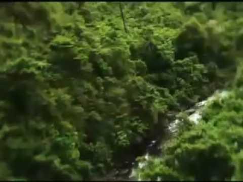 Enchanted forest water safari coupon code