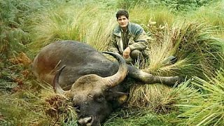 "getlinkyoutube.com-""Old days in Indochina"", Seladang (gaur) hunting"