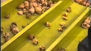 Walnutcracker/Σπαστήρας καρυδιών
